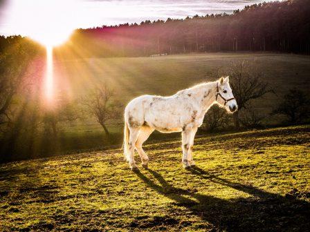bestshot art pferd