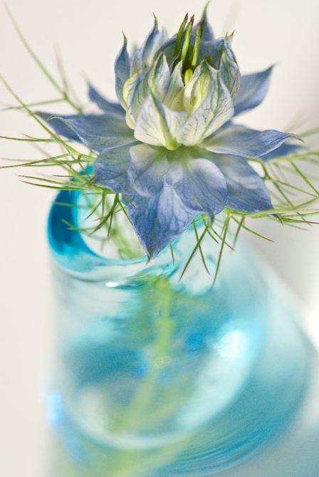 blaue blume in glasvase auf weißem hintergrund vase in unschärfe