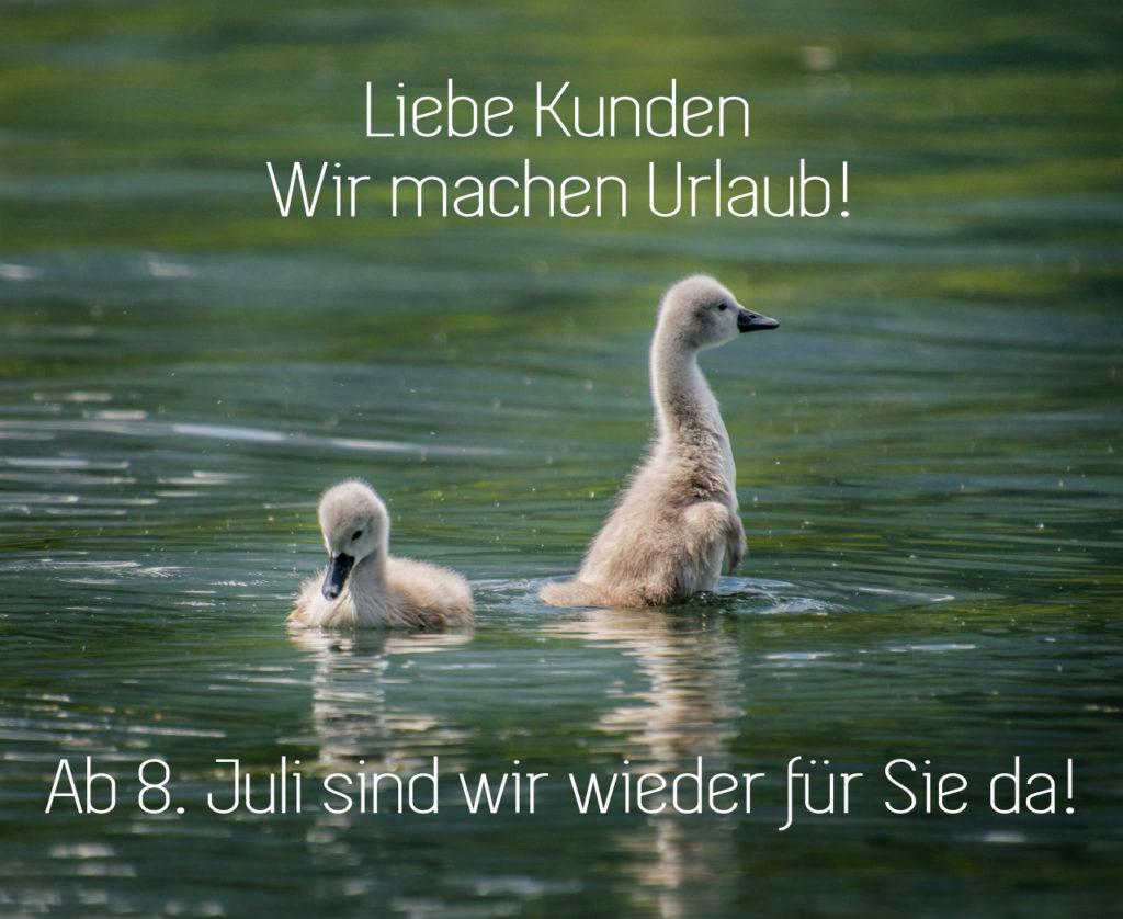 Schwanenjunge schwimmen im See